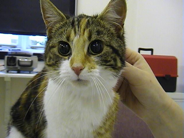 Cat Left Eye Dilated