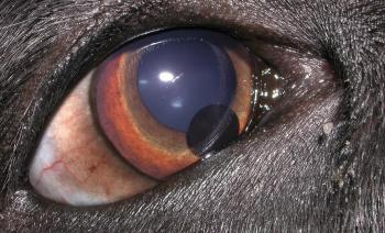 Veterinary Ophthalmology Case Histories Research And